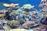 colourful-coral-reef-deep-underwater