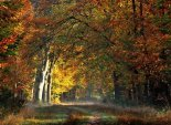 another_lovely_autumnal_forest_walk_by_jchanders-d6x8g1k