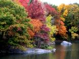 autumn_trees_along_lake_in_central_park