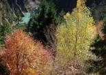 Pole Wald album review